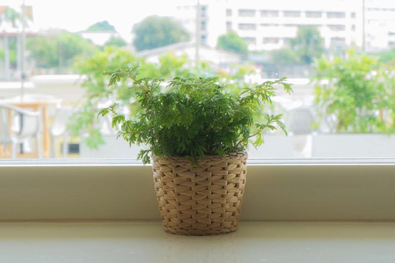 Plant vases indoor 20 images light grey set of two for Top 20 indoor plants